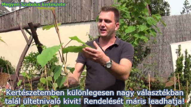 kivi növény rendelése
