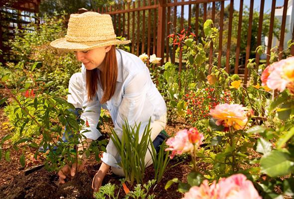 kertészeti kiegészítő termékek a Megyeri kertészetben