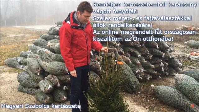 karácsonyfa házhozszállítás Megyeri kertészet