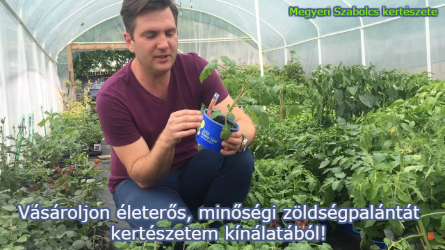zöldségpalánta vásárlás
