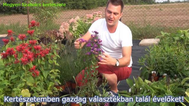 Évelő növények gazdag választéka a Megyeri kertészetben!