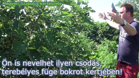 különleges kerti gyümölcsök