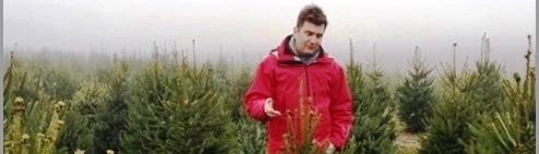 Élő, dézsás karácsonyfák széles választéka a Megyeri kertészetben!