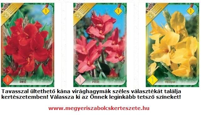 Kána virághagyma vásárlás a Megyeri kertészetből!