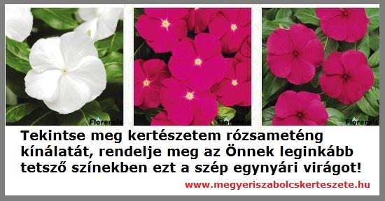 Rózsameténg kapható kertészeti webáruházamban!