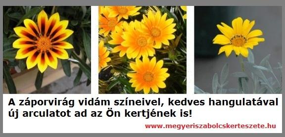 Záporvirág kapható kertészeti webáruházamban!