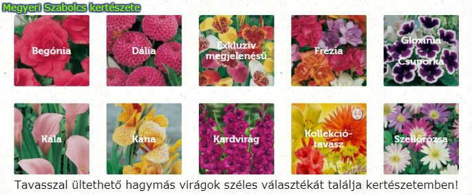 tavasszal ültethető hagymás virágok