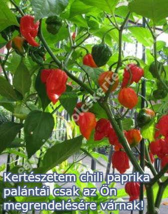 chili paprika palánta rendelés