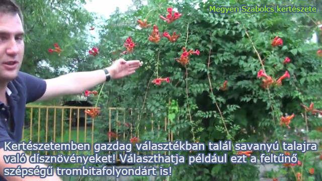 savanyú talajra való növények