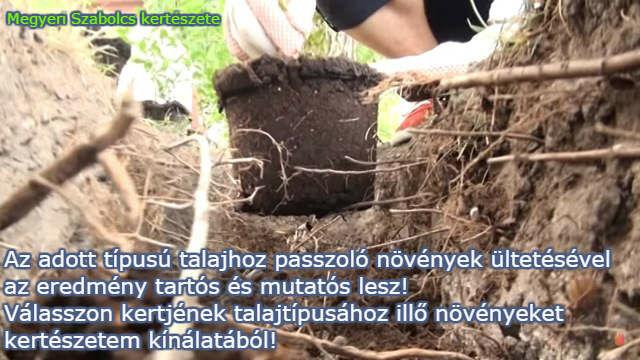 talajtípusok szerinti növények
