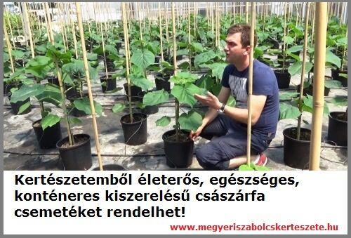 Császárfa rendelhető a Megyeri kertészetből!