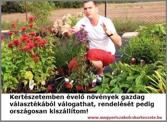 Évelő növények rendelhetők kertészetemből!