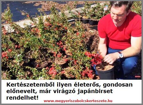 Japánbirs rendelhető kertészetemből!