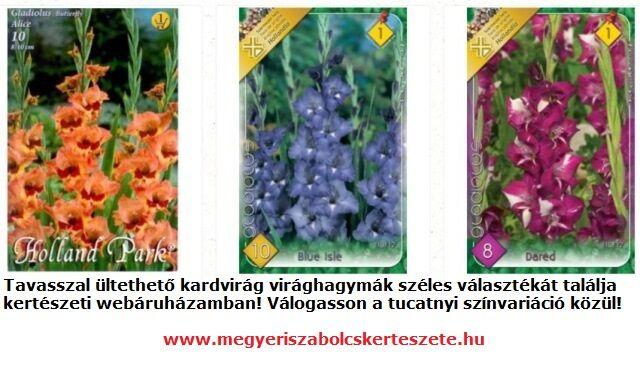 Kardvirág virághagyma vásárlás a Megyeri kertészetben
