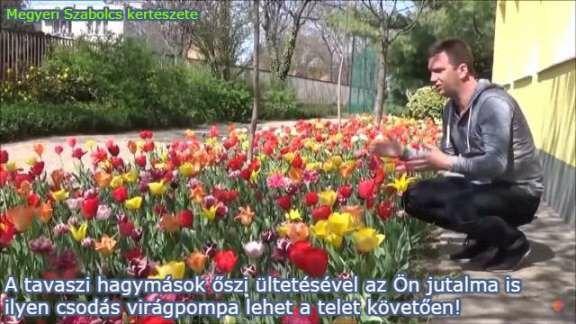 Virághagymák gazdag választéka a Megyeri kertészetben!