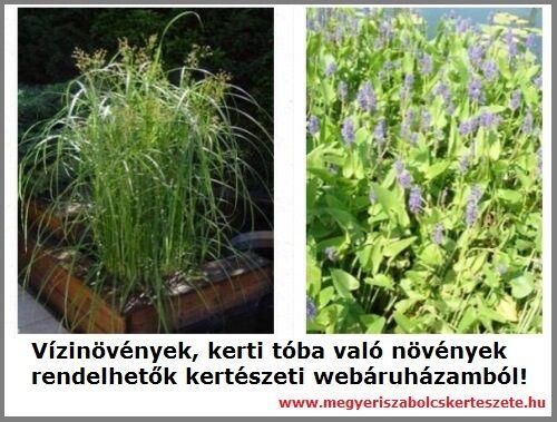 Vízinövények széles választéka a Megyeri kertészetben!