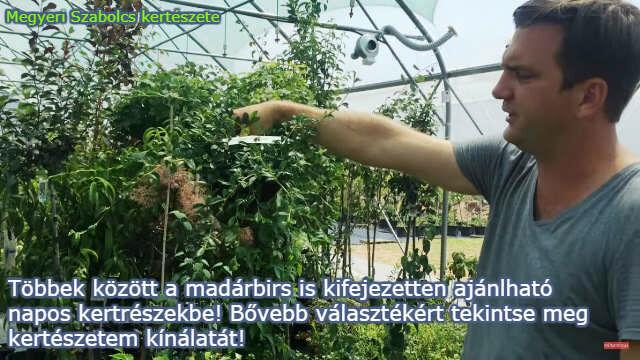 napos helyre való növények a Megyeri kertészetben