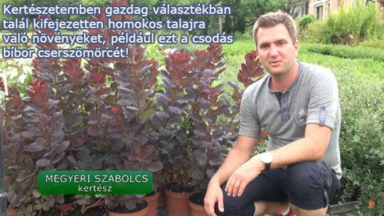 homokos talajra való növények