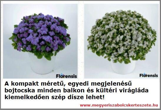 Bojtocska rendelhető a Megyeri kertészetből!