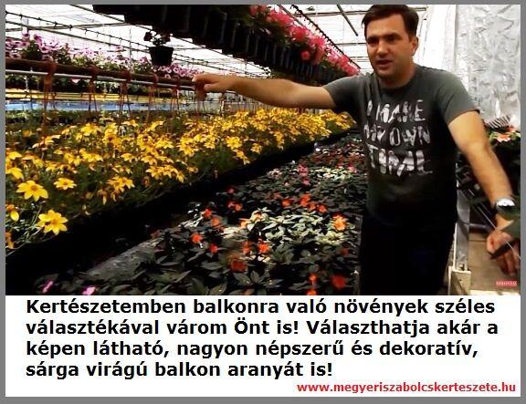 Balkonra való növények széles választéka a Megyeri kertészetben!