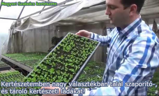 kertészeti ládák és rekeszek a Megyeri kertészetben!