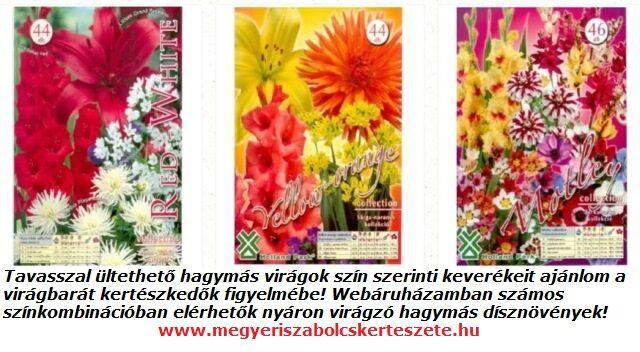 Tavasszal ültethető hagymás virágok a Megyeri kertészetben!