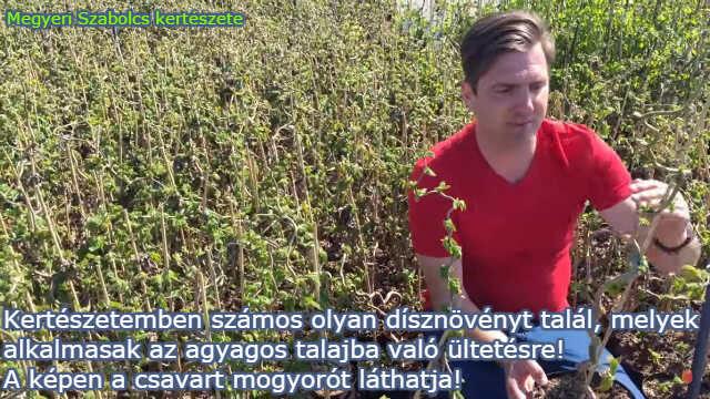 agyagos talajra való növények