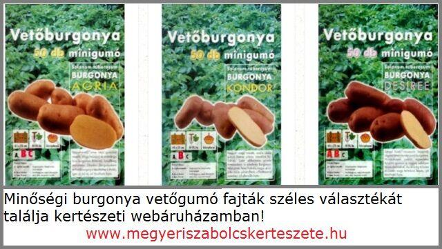 Vetőburgonya fajták széles választéka a Megyei kertészetben!