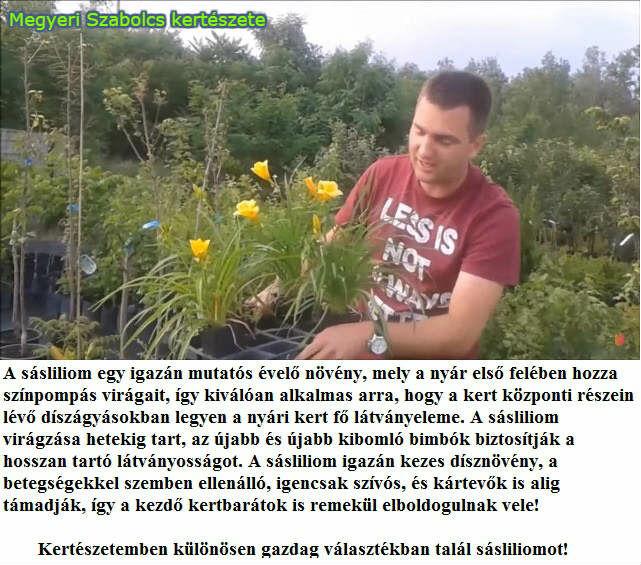 sásliliom vásárlás Megyeri kertészet